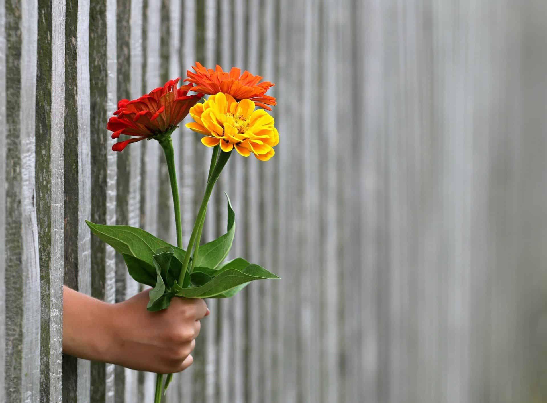 www.mydailyspanish.com Dar Give Flowers