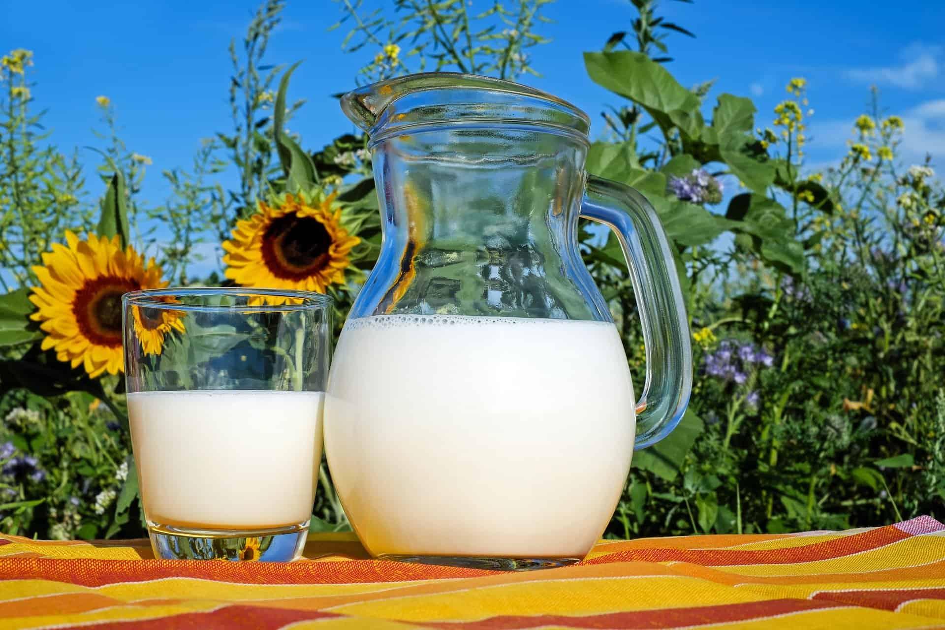 www.mydailyspanish.com Milk Ser la Leche